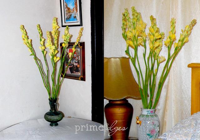 Mewarnai Bunga Primeedges